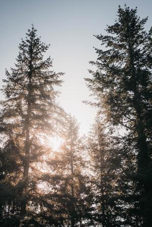 photographe style moody en forêt