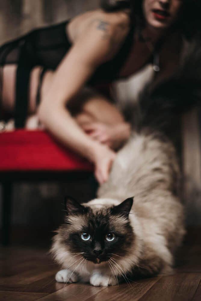 séance photo portrait boudoir avec chat